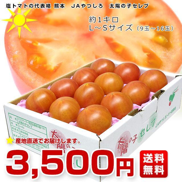 熊本県より産地直送 JAやつしろ 太陽の子セレブ フルーツトマト 約1キロ LからSサイズ(9玉から16玉) 送料無料 とまと sanchokudayori 02