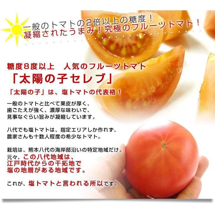 熊本県より産地直送 JAやつしろ 太陽の子セレブ フルーツトマト 約1キロ LからSサイズ(9玉から16玉) 送料無料 とまと sanchokudayori 03