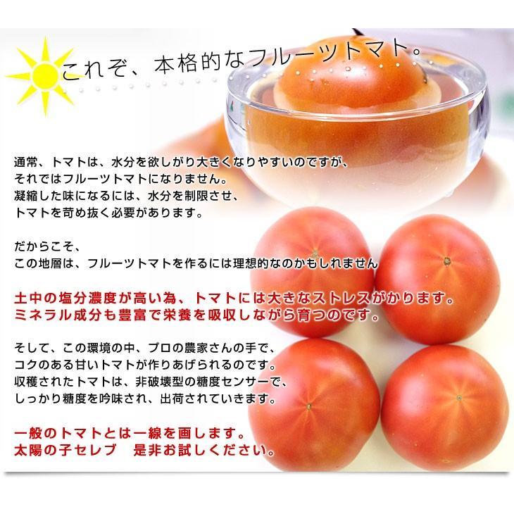熊本県より産地直送 JAやつしろ 太陽の子セレブ フルーツトマト 約1キロ LからSサイズ(9玉から16玉) 送料無料 とまと sanchokudayori 04