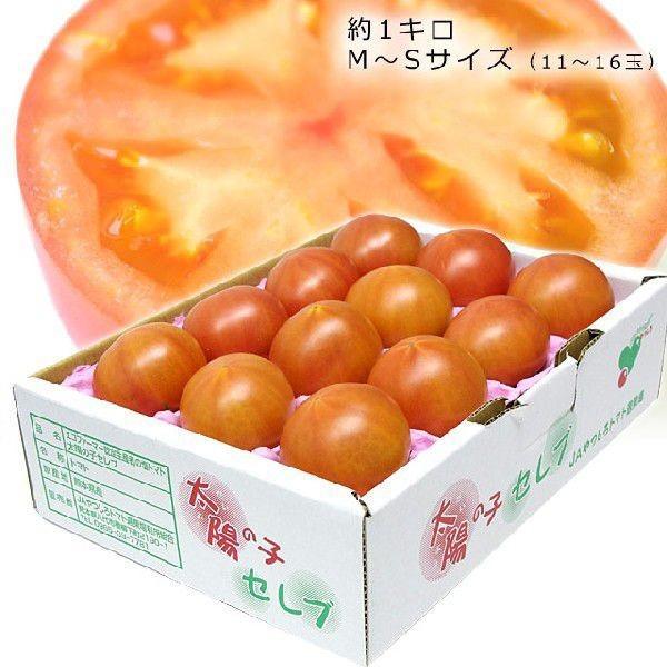 熊本県より産地直送 JAやつしろ 太陽の子セレブ フルーツトマト 約1キロ LからSサイズ(9玉から16玉) 送料無料 とまと sanchokudayori 06