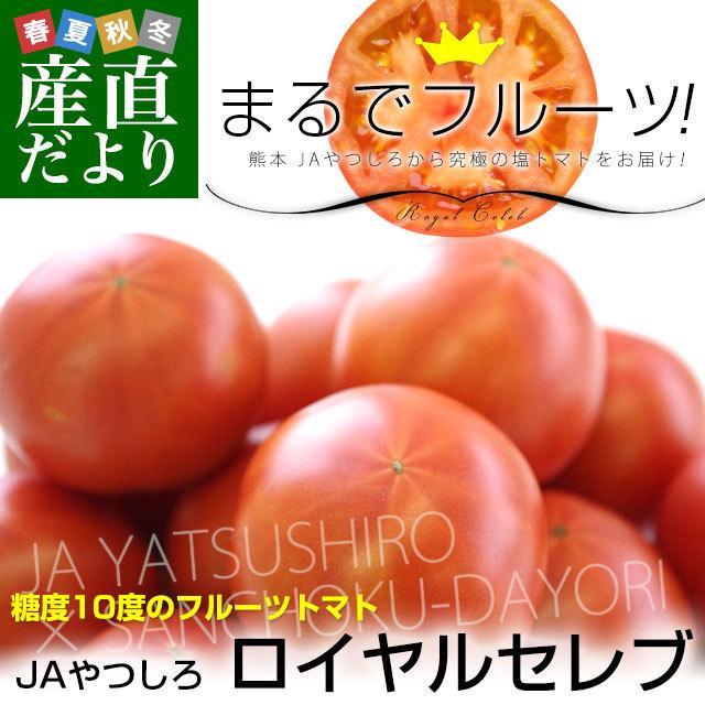 熊本県より産地直送 JAやつしろ フルーツトマト ロイヤルセレブ 約1キロ LからSサイズ(9から16玉) とまと|sanchokudayori
