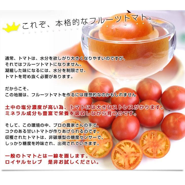 熊本県より産地直送 JAやつしろ フルーツトマト ロイヤルセレブ 約1キロ LからSサイズ(9から16玉) とまと|sanchokudayori|05