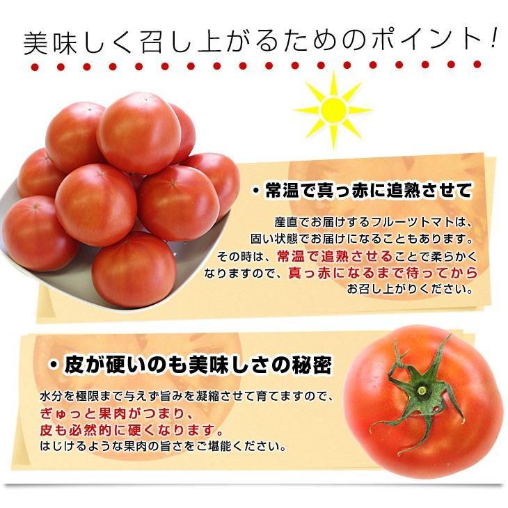 熊本県より産地直送 JAやつしろ フルーツトマト ロイヤルセレブ 約1キロ LからSサイズ(9から16玉) とまと|sanchokudayori|06