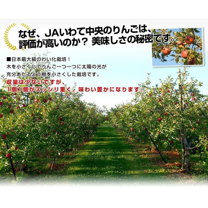 岩手県より産地直送 JAいわて中央 皮ごとまるごと!特別栽培りんご 5 キロ (14玉から25玉) 林檎 リンゴ 送料無料 sanchokudayori 06