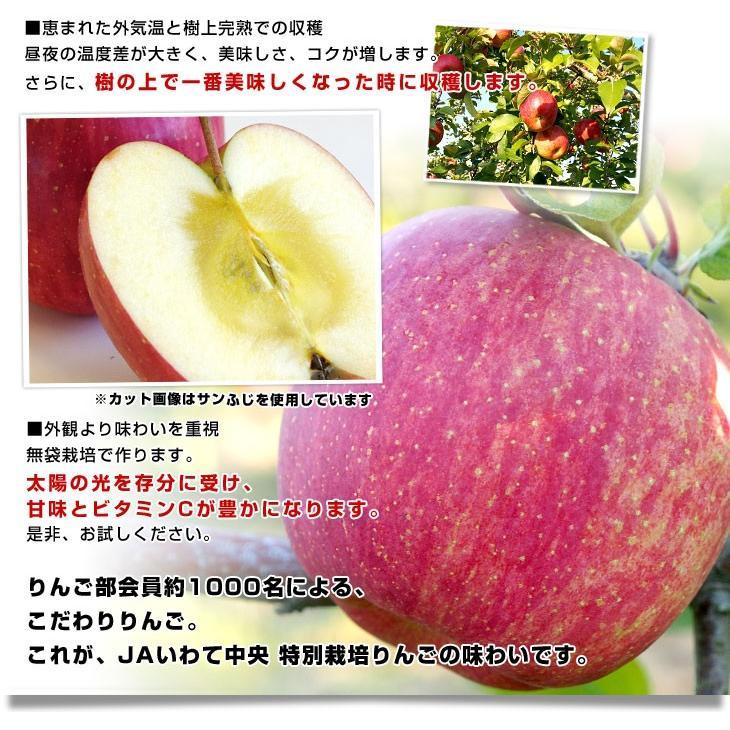 岩手県より産地直送 JAいわて中央 皮ごとまるごと!特別栽培りんご 5 キロ (14玉から25玉) 林檎 リンゴ 送料無料 sanchokudayori 07