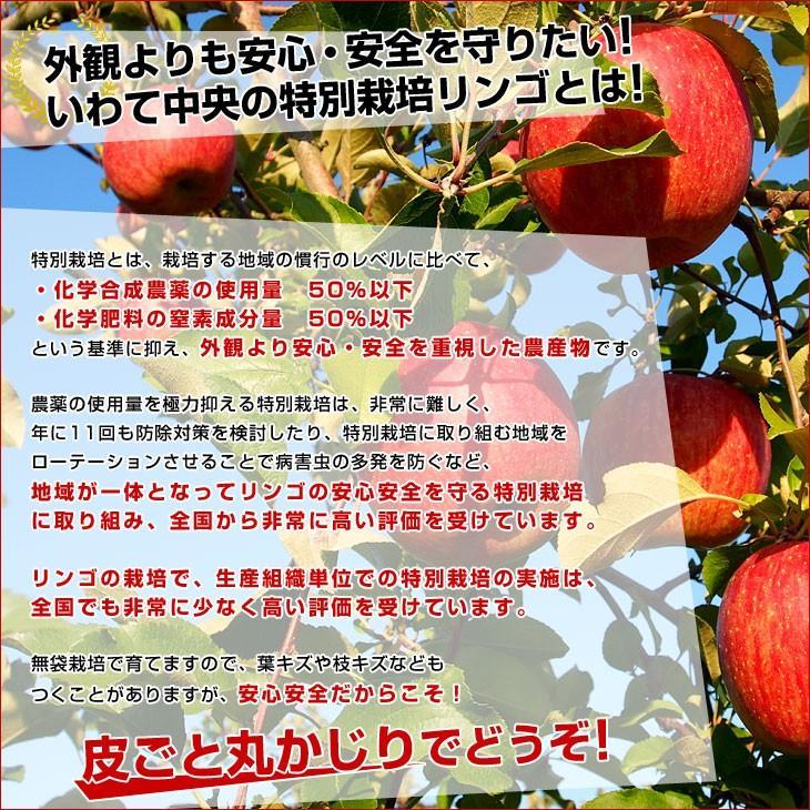 岩手県より産地直送 JAいわて中央 皮ごとまるごと!特別栽培りんご 5 キロ (14玉から25玉) 林檎 リンゴ 送料無料 sanchokudayori 04