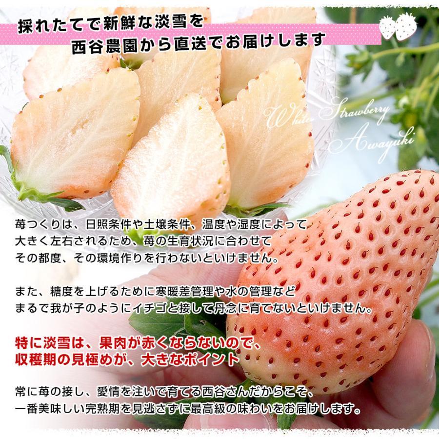 熊本県より産地直送 西谷農園の白いちご 淡雪(あわゆき) Lサイズ以上 約540g(270g×2P(8粒から15粒×2P))苺 イチゴ 送料無料|sanchokudayori|05