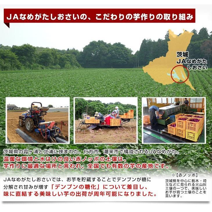 茨城県より産地直送 JAなめがたしおさい さつまいも「熟成紅こがね」 Mサイズ 約5キロ(18本前後) 送料無料 行方 薩摩芋|sanchokudayori|05