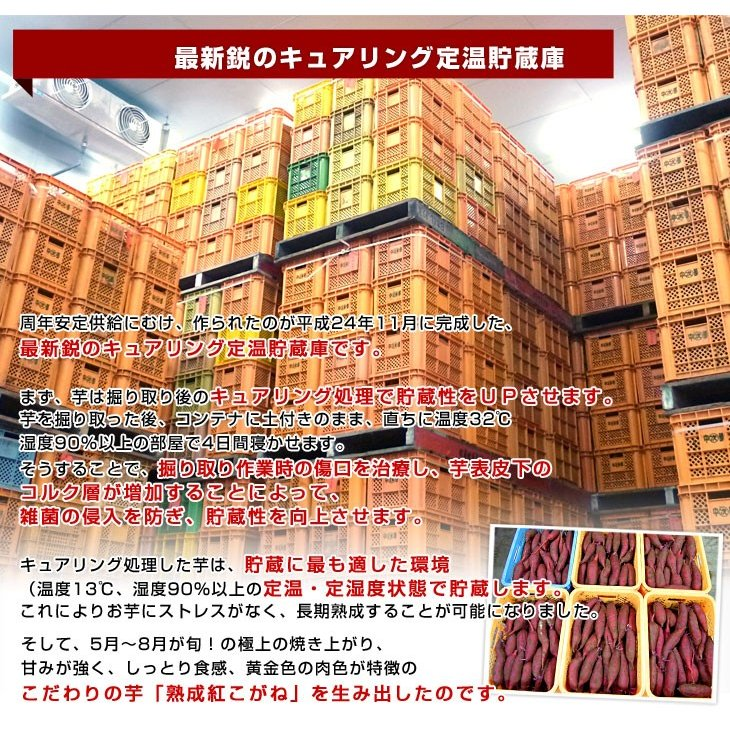 茨城県より産地直送 JAなめがたしおさい さつまいも「熟成紅こがね」 Mサイズ 約5キロ(18本前後) 送料無料 行方 薩摩芋|sanchokudayori|06