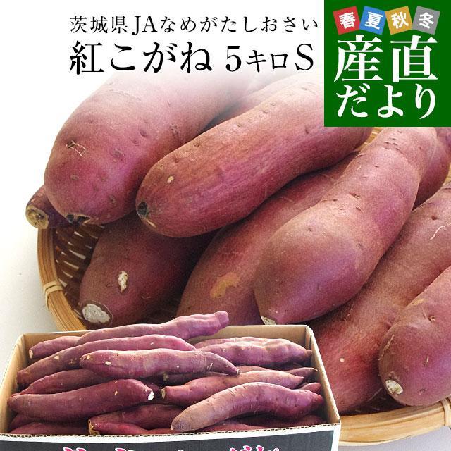 茨城県より産地直送 JAなめがたしおさい さつまいも「熟成紅こがね」 Sサイズ 約5キロ(25本から30本) 送料無料 行方 薩摩芋|sanchokudayori