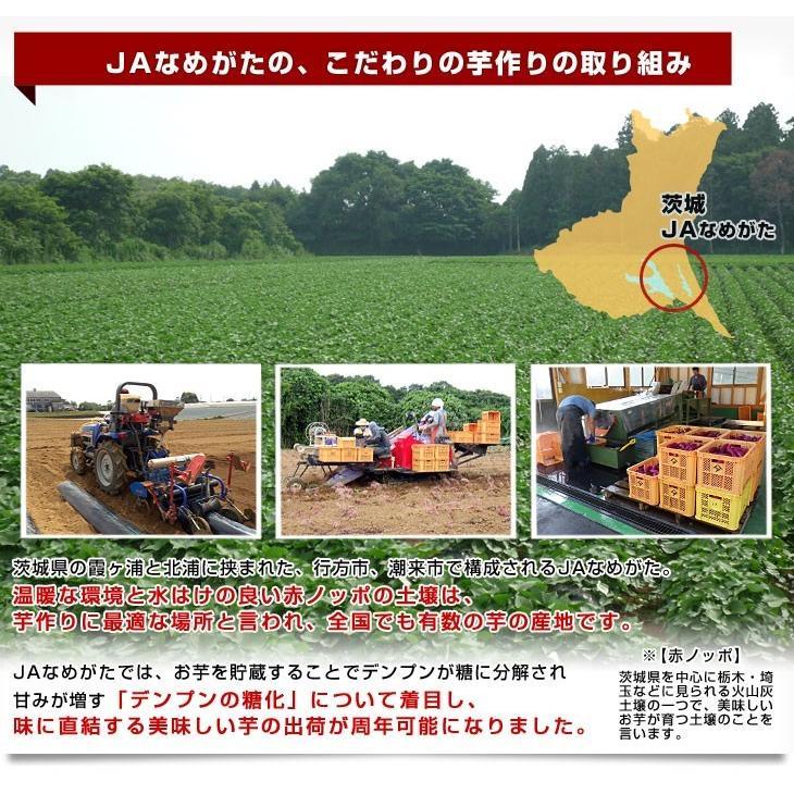 茨城県より産地直送 JAなめがた さつまいも「紅まさり(べにまさり)」 Sサイズ 約5キロ(25本から30本前後) 送料無料 さつま芋 サツマイモ 薩摩芋|sanchokudayori|05