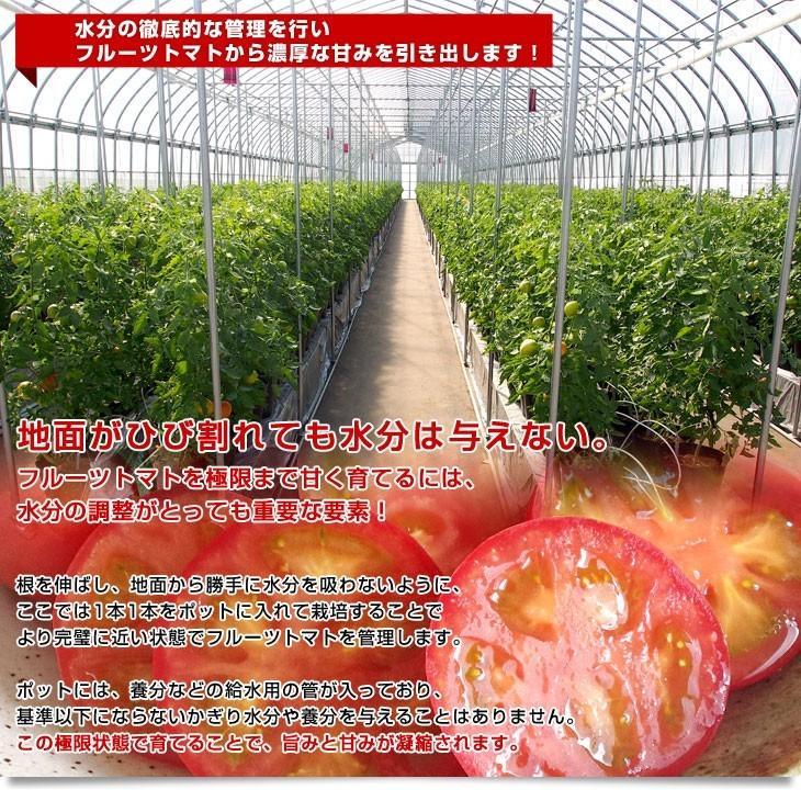 北海道より産地直送 下川町のスーパーフルーツトマト <北の極> 秀品 約800g LからSサイズ(8玉から15玉)送料無料 とまと|sanchokudayori|05