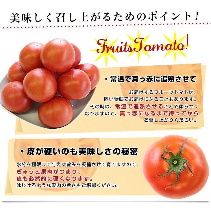 北海道より産地直送 下川町のスーパーフルーツトマト <北の極> 秀品 約800g LからSサイズ(8玉から15玉)送料無料 とまと|sanchokudayori|07