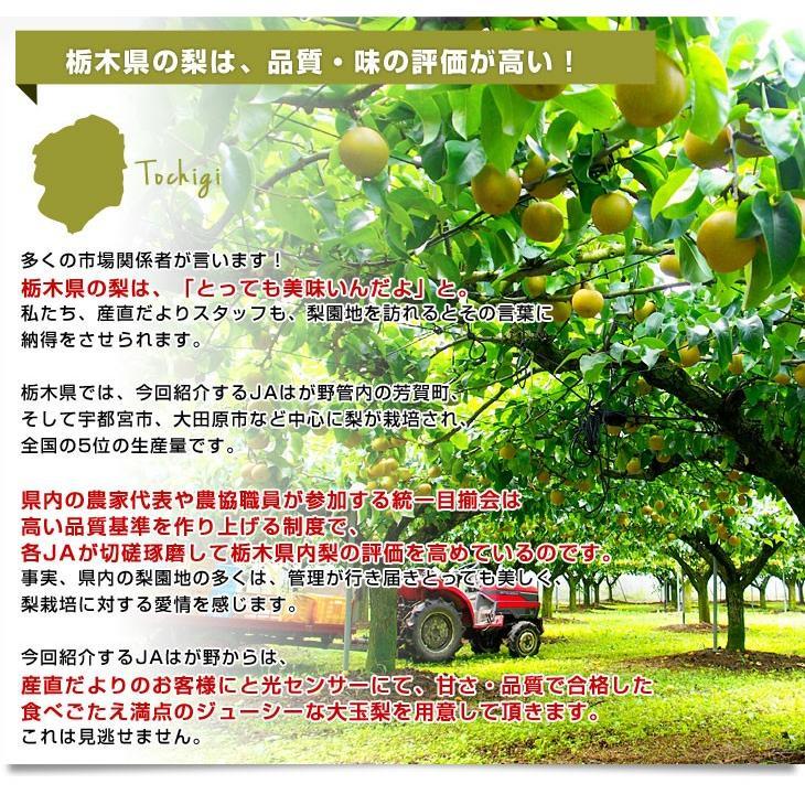 栃木県より産地直送 JAはが野 にっこり梨 大玉 5キロ (4玉から7玉)送料無料 優品以上 なし 梨 ナシ sanchokudayori 04