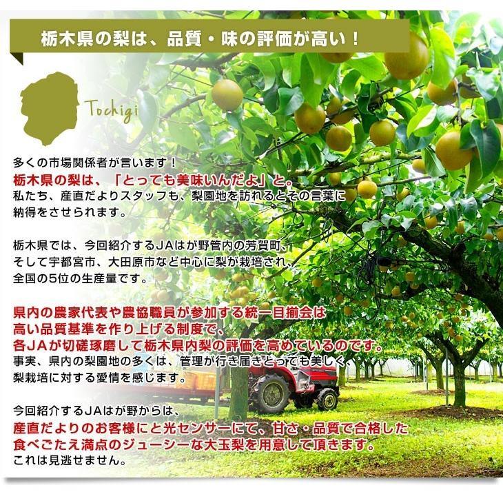 送料無料 栃木県より産地直送 JAはが野 高糖度梨「しんか」糖度13度以上 幸水梨または、豊水梨 約2.2キロ (6玉入) なし ナシ|sanchokudayori|05