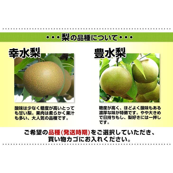 送料無料 栃木県より産地直送 JAはが野 高糖度梨「しんか」糖度13度以上 幸水梨または、豊水梨 約2.2キロ (6玉入) なし ナシ|sanchokudayori|07