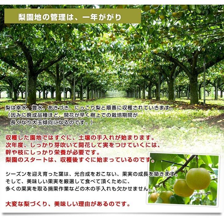 送料無料 栃木県より産地直送 JAはが野の梨 (大玉限定) 優品以上 約5キロ (8玉から10玉) なし ナシ sanchokudayori 05