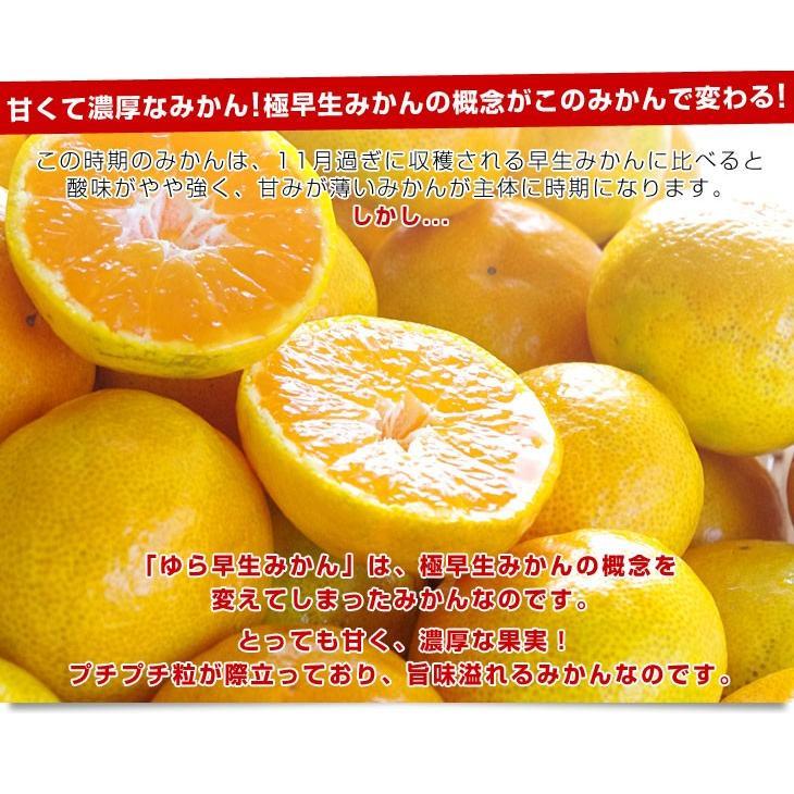 和歌山県より産地直送 JAありだ ゆら早生みかん 5キロ SからSSサイズ 蜜柑 ミカン 送料無料 sanchokudayori 04