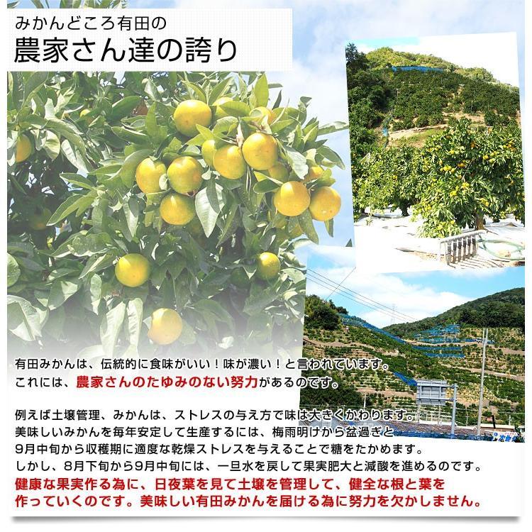 和歌山県より産地直送 JAありだ ゆら早生みかん 5キロ SからSSサイズ 蜜柑 ミカン 送料無料 sanchokudayori 06