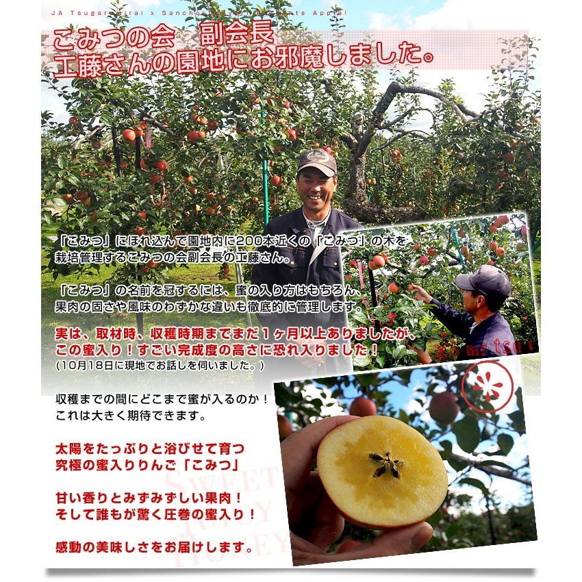 青森県より産地直送 JA津軽みらい 蜜入りりんご「こみつ」 秀品 2キロ (8玉から11玉) 送料無料 林檎 りんご sanchokudayori 06