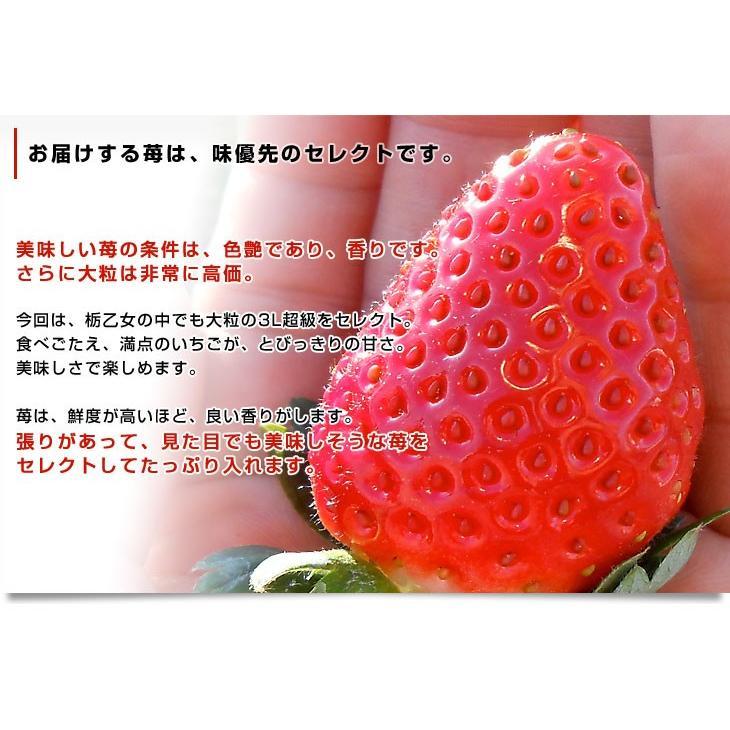 栃木県より産地直送 JAかみつが 本場の栃乙女 SD 320g×2P (12粒から15粒×2P) いちご イチゴ 苺 送料無料 上都賀|sanchokudayori|04