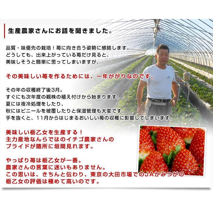 栃木県より産地直送 JAかみつが 本場の栃乙女 SD 320g×2P (12粒から15粒×2P) いちご イチゴ 苺 送料無料 上都賀|sanchokudayori|05
