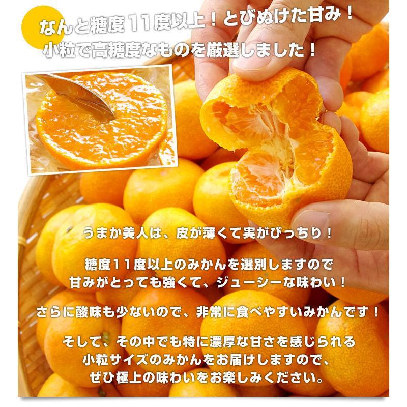 佐賀県より産地直送 JAからつ 小粒うまか美人 高糖度みかん Sから3Sサイズ  約2キロ×2箱  送料無料 U・M・K美人 蜜柑 温州ミカン sanchokudayori 05
