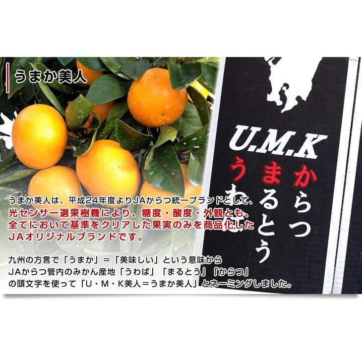 佐賀県より産地直送 JAからつ 小粒うまか美人 高糖度みかん Sから3Sサイズ  約2キロ×2箱  送料無料 U・M・K美人 蜜柑 温州ミカン sanchokudayori 06
