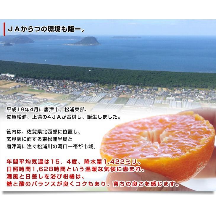 佐賀県より産地直送 JAからつ 小粒うまか美人 高糖度みかん Sから3Sサイズ  約2キロ×2箱  送料無料 U・M・K美人 蜜柑 温州ミカン sanchokudayori 08