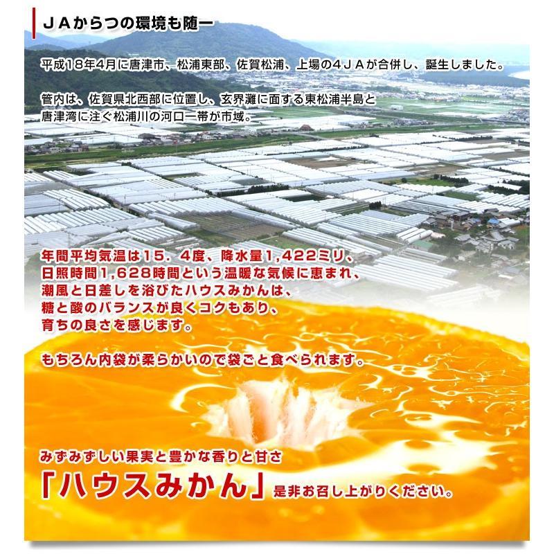 送料無料 佐賀県より産地直送 JAからつ ハウスみかん 3Sサイズ  約1.2キロ(約30玉) 蜜柑 ミカン|sanchokudayori|06