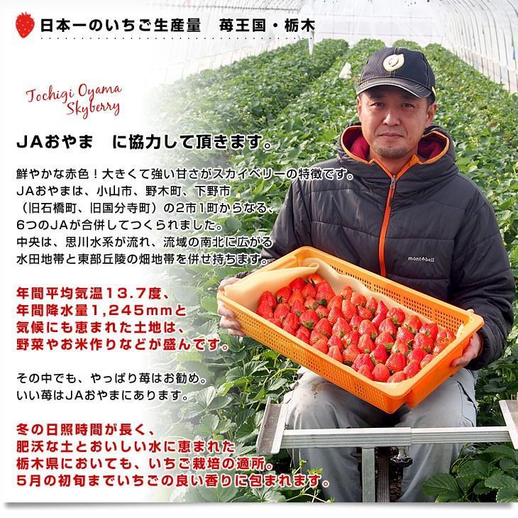 栃木県より産地直送 JAおやま スカイベリー 約300g×2P(6から12粒×2P) 送料無料 いちご イチゴ 苺  ※クール便発送|sanchokudayori|05