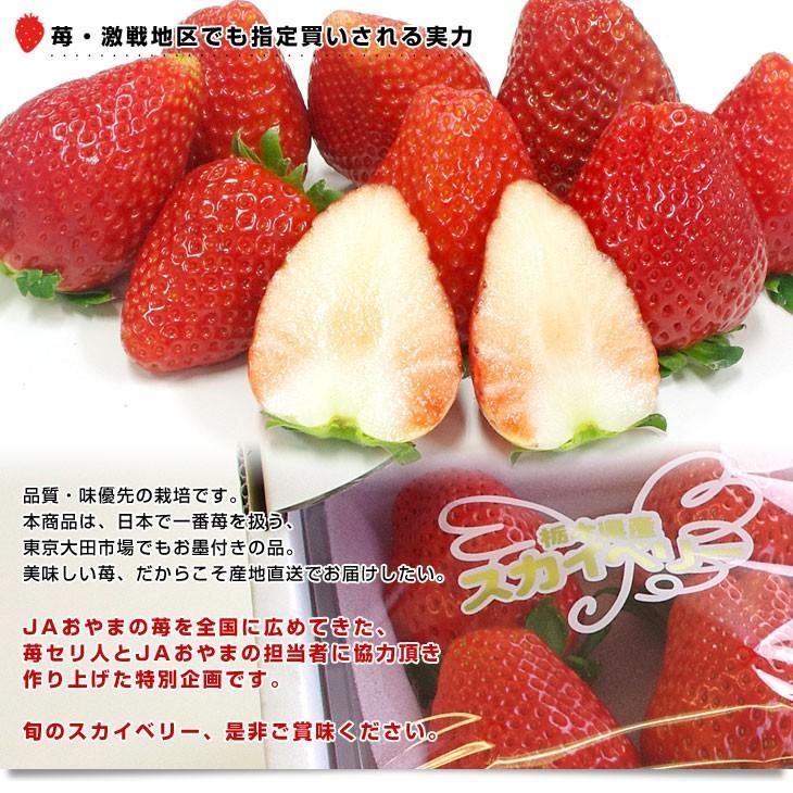 栃木県より産地直送 JAおやま スカイベリー 約300g×2P(6から12粒×2P) 送料無料 いちご イチゴ 苺  ※クール便発送|sanchokudayori|08