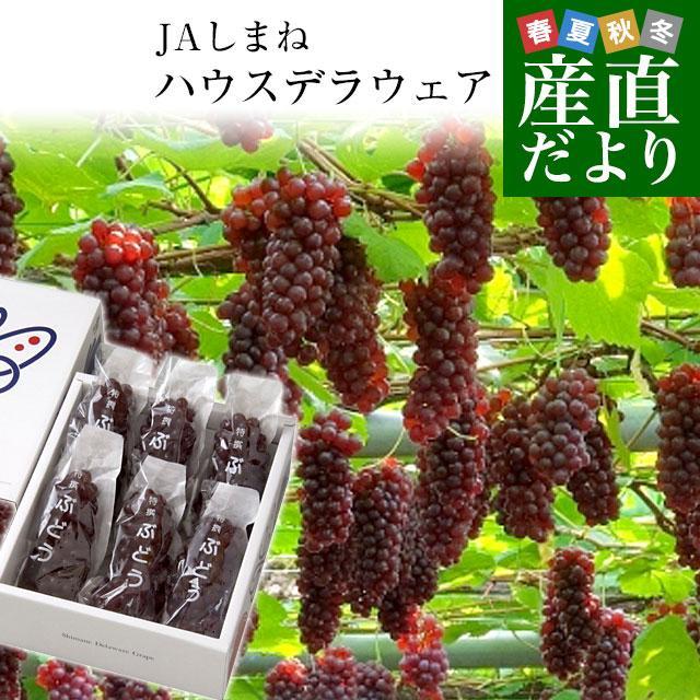 島根県より産地直送 JAしまね ハウスデラウェア 赤秀 Lから2Lサイズ (6房から7房) 1キロ化粧箱入り sanchokudayori