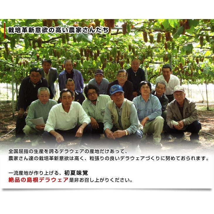 島根県より産地直送 JAしまね ハウスデラウェア 赤秀 Lから2Lサイズ (6房から7房) 1キロ化粧箱入り sanchokudayori 05