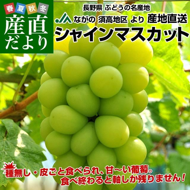 長野県より産地直送 JAながの(須高地区)シャインマスカット 約2キロ 3から4房 ぶどう 葡萄 ブドウ sanchokudayori