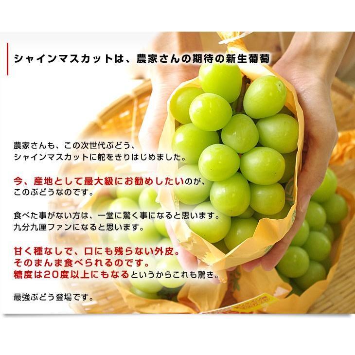 長野県より産地直送 JAながの(須高地区)シャインマスカット 約2キロ 3から4房 ぶどう 葡萄 ブドウ sanchokudayori 04