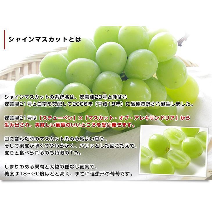 長野県より産地直送 JAながの(須高地区)シャインマスカット 約2キロ 3から4房 ぶどう 葡萄 ブドウ sanchokudayori 05