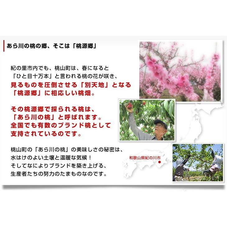 和歌山県より産地直送 JA紀の里 あら川の桃 赤秀品 1.8キロ (6玉から8玉) 送料無料 桃 もも あらかわ|sanchokudayori|04