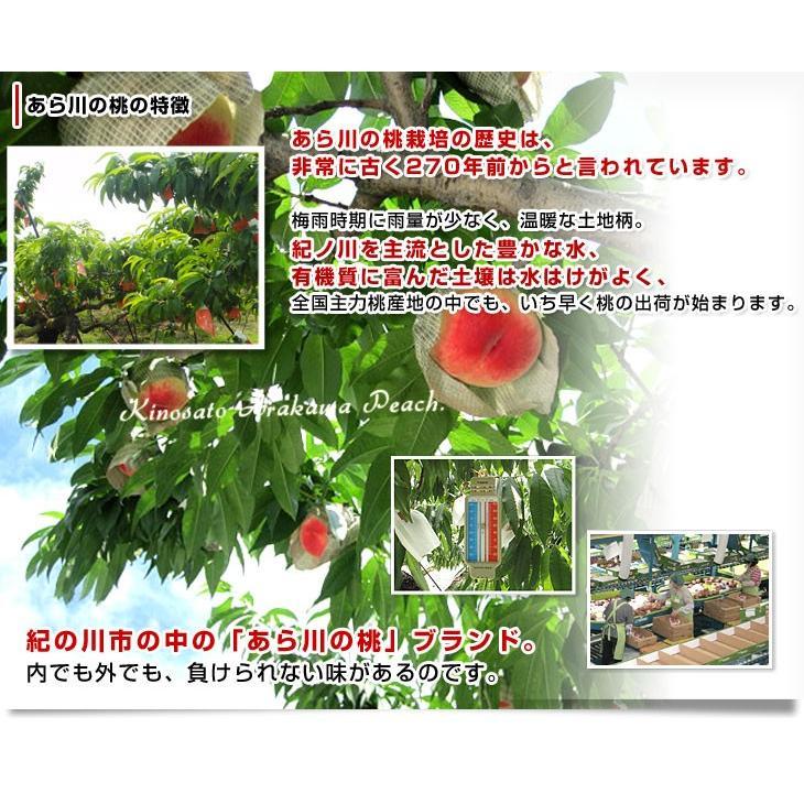 和歌山県より産地直送 JA紀の里 あら川の桃 赤秀品 1.8キロ (6玉から8玉) 送料無料 桃 もも あらかわ|sanchokudayori|05