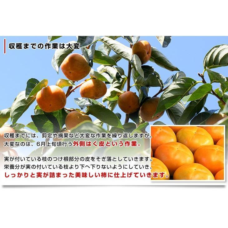 和歌山県より産地直送 JA紀の里 たねなし柿 合計4キロ 2キロ×2箱 (10玉から12玉入り×2箱) カキ かき 柿 送料無料 sanchokudayori 05