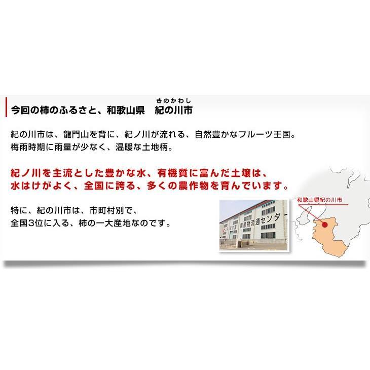 送料無料 和歌山県より産地直送 JA紀の里 黒あま 2キロ(8玉から9玉) カキ かき 柿|sanchokudayori|05