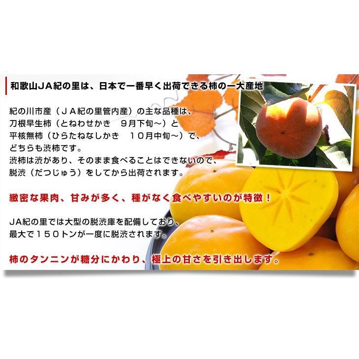 和歌山県より産地直送 JA紀の里 たねなし柿 大玉3Lサイズ 3.75キロ(14玉入) カキ かき 柿 送料無料|sanchokudayori|04