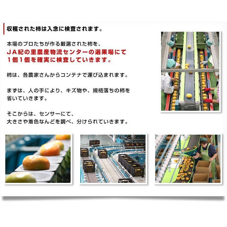 和歌山県より産地直送 JA紀の里 たねなし柿 大玉3Lサイズ 3.75キロ(14玉入) カキ かき 柿 送料無料|sanchokudayori|05