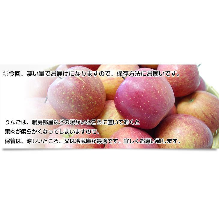 年末特別価格 青森県より産地直送 青森県産のサンふじりんご 約10キロ(28から36玉前後) sanchokudayori 04