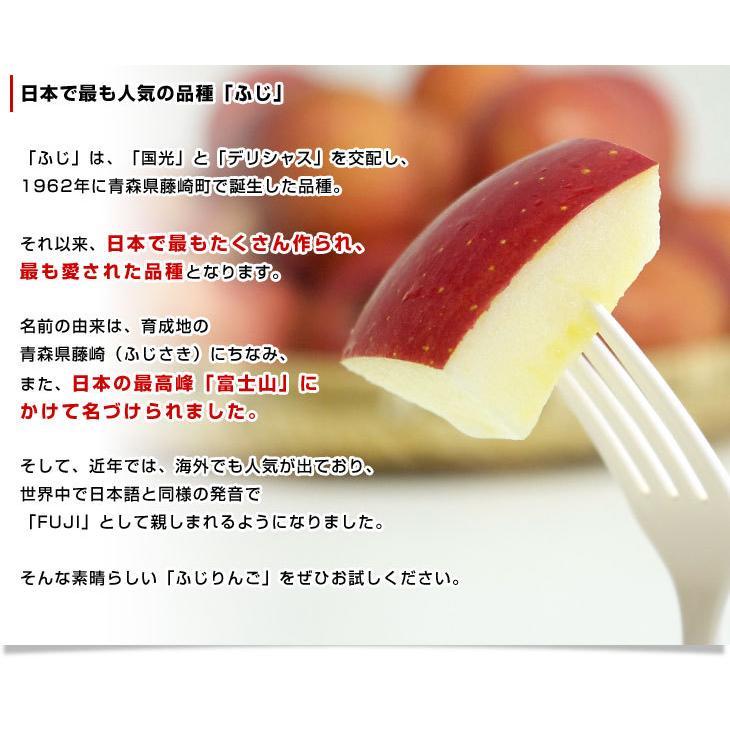 年末特別価格 青森県より産地直送 青森県産のサンふじりんご 約10キロ(28から36玉前後) sanchokudayori 05