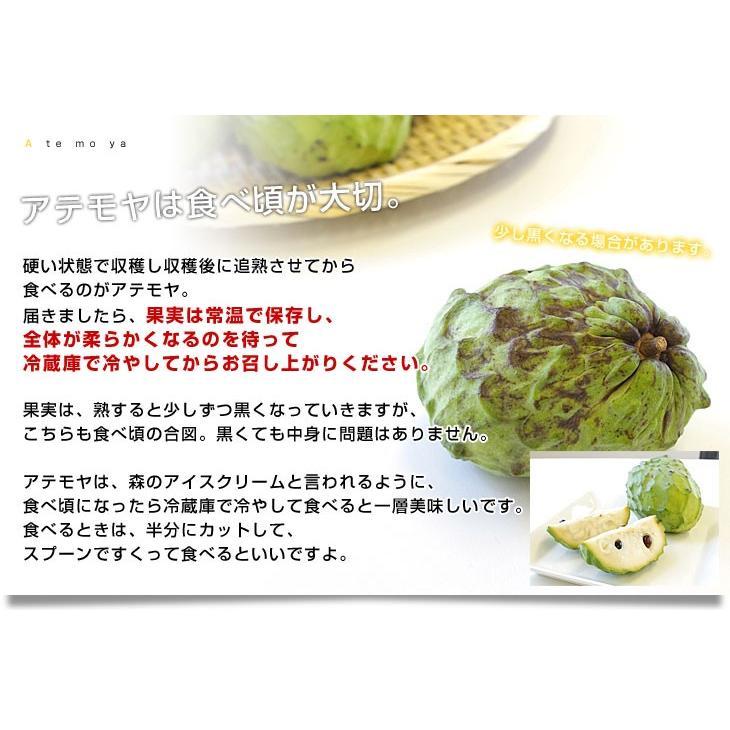沖縄県より産地直送 JAおきなわ アテモヤ LからSサイズ 約1.8キロ (6玉から10玉) あてもや トロピカル|sanchokudayori|05