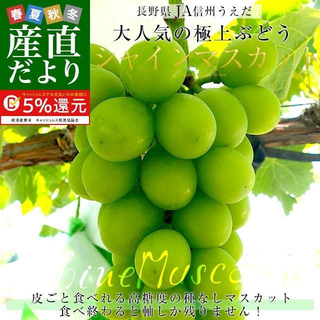 送料無料 長野県より産地直送 JA信州うえだ シャインマスカット 合計1.2キロ(大房2房入り)ぶどう 葡萄|sanchokudayori