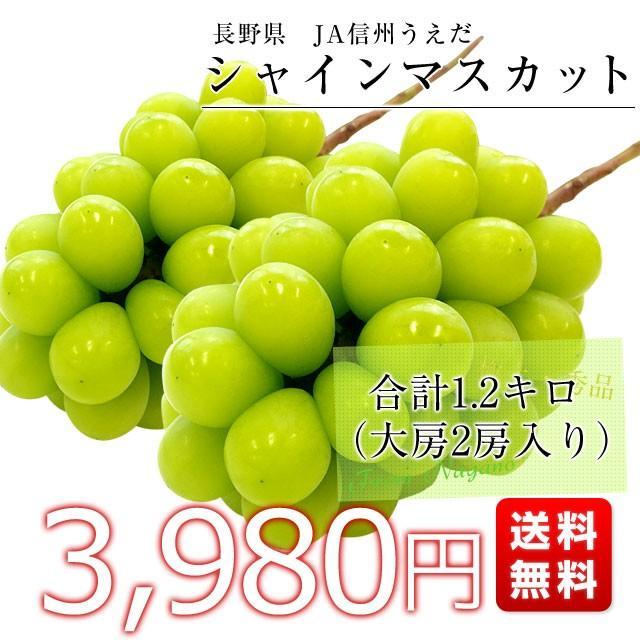 送料無料 長野県より産地直送 JA信州うえだ シャインマスカット 合計1.2キロ(大房2房入り)ぶどう 葡萄|sanchokudayori|02