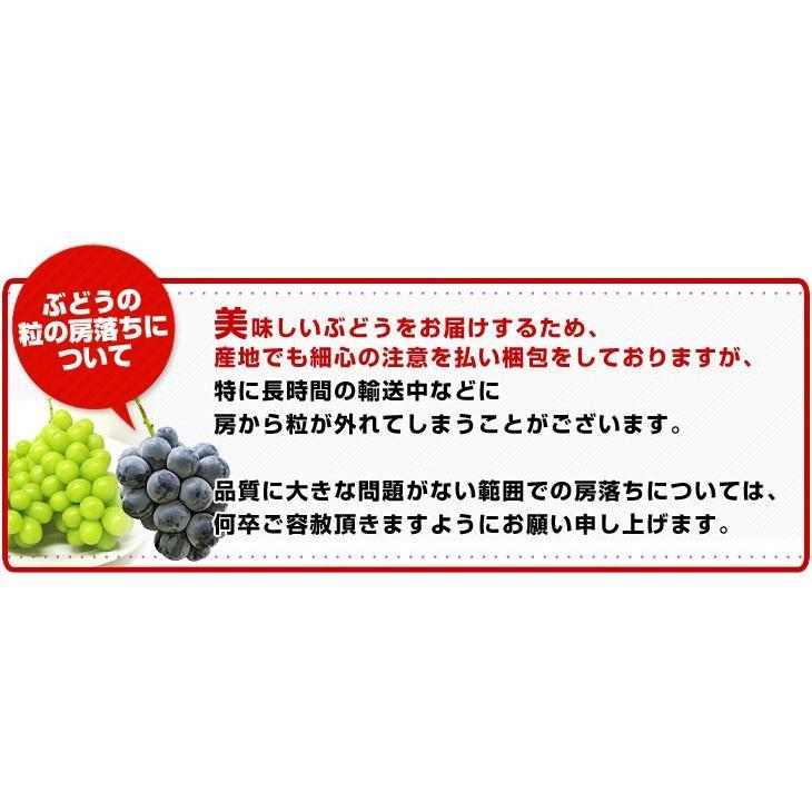 送料無料 長野県より産地直送 JA信州うえだ シャインマスカット 合計1.2キロ(大房2房入り)ぶどう 葡萄|sanchokudayori|06