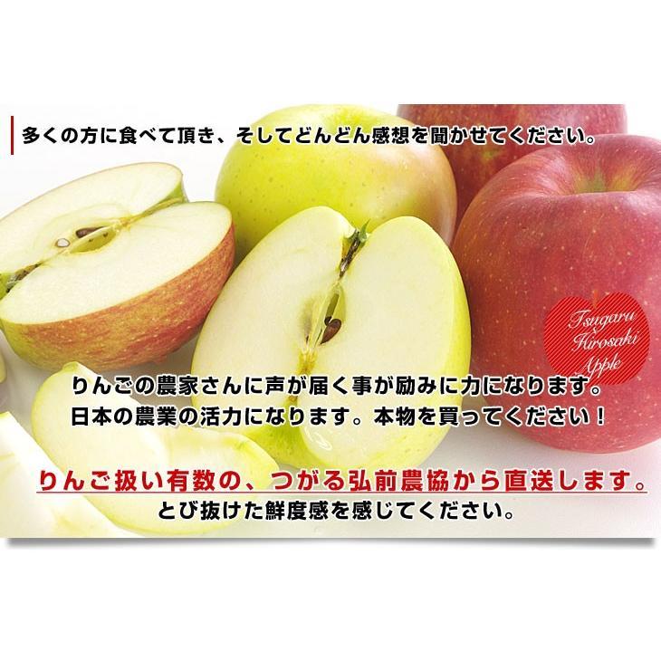 青森県より産地直送 JAつがる弘前 極旨・産直りんご 選べる品種 約3キロ(9玉から13玉) 林檎  送料無料|sanchokudayori|08